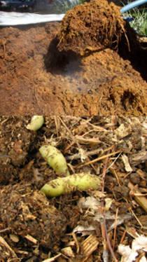 Abono organico compost fertilizante quimico natural
