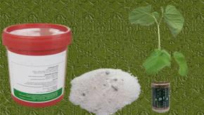 Veneno para cucarachas con acido borico for Piscina hongos genitales