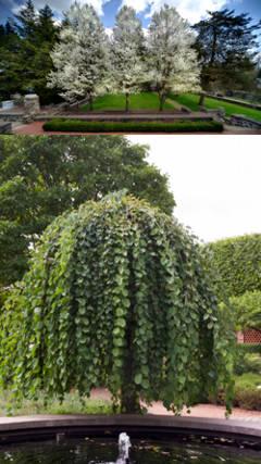 Arboles de jardin de distintos tipos for Arbol de fuego jardin