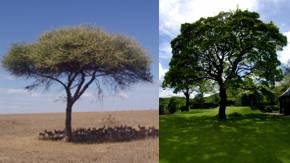 Arboles de sombra de distintas especies for Viveros de arboles de sombra