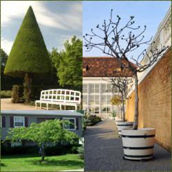 Arboles para decoracion en el jardin diferentes especies for Arboles perennes para jardin