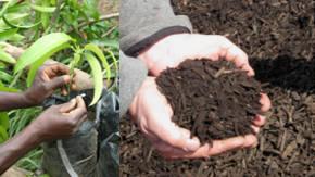 Como cuidar las plantas de sombra Como-cuidar-las-plantas-de-sombra-consejos