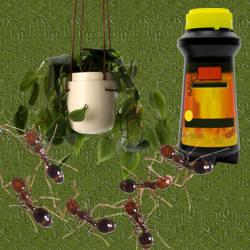 Como matar hormigas negras chiquitas - Como eliminar las hormigas de la casa ...