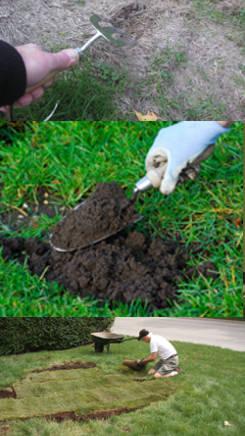 C mo hacer palmeritas de hojaldre - Arreglar jardin abandonado ...