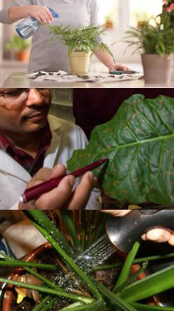 Cuidados de plantas de interior tips de mantenimiento - Cuidados plantas interior ...