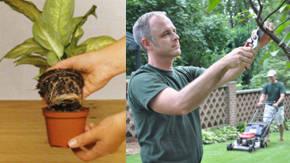 mantenimiento de las plantas ornamentales plantas