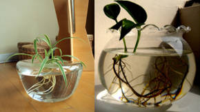 Fotos plantas de interior finest cmo cuidar las plantas de interior with fotos plantas de - Plantas de agua para interiores ...