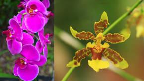 flores orquideas esteticas y decorativas