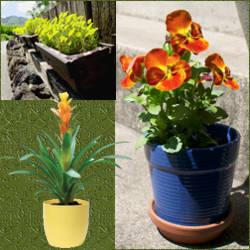 plantas para macetas a pleno sol