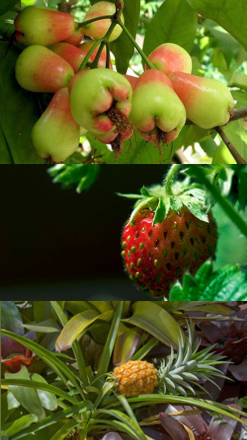 Pin uso en frutales y hortalizas on pinterest for Plantas frutales
