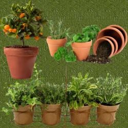 Huerta en casa en macetas for Cultivo de arboles frutales en macetas
