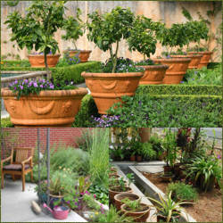 Imagenes de jardines con macetas informacion y fotos for Como decorar un jardin con macetas