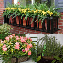 Casas cocinas mueble plantas de maceta para exterior - Plantas de sombra exterior ...