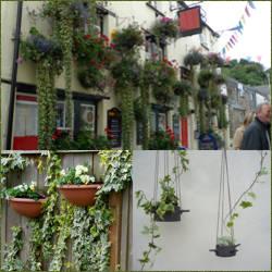 macetas de hiedra colgantes - Plantas Colgantes Exterior
