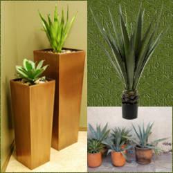 Macetas para interiores hogar for Macetas interiores decoracion