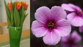 Nombres De Flores Denominacion Cientifica