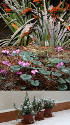 Plantas de exterior resistentes a temperaturas extremas - Plantas exterior resistentes ...