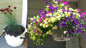 Tipos de plantas de exterior perfect great regala hoy - Plantas de hojas grandes y verdes de exterior ...