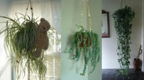 Decoracion De Interiores Con Plantas Colgantes