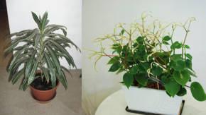 Plantas de interior resistentes fuertes y saludables - Plantas de interior sin luz ...