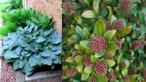 Plantas De Sombra Para Ornamentacion De Jardines - Plantas-de-sombra