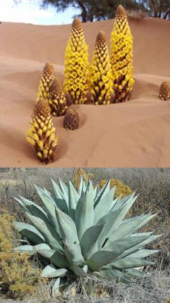 Pin plantas del desierto para colorear image search - Clases de flores y sus nombres ...