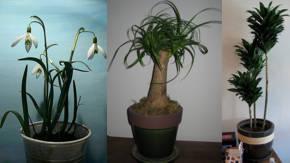 Ver fotos de plantas para interiores - Ver plantas de interior ...