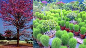 Plantas exterior plantas de exterior primula contamos for Plantas ornamentales para exteriores