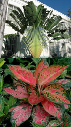 Plantas de jardin exterior plantas jardines moderno flores paisajismo plantas de sombra arce - Plantas de jardin exterior ...