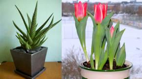 Plantas de ornato definicion wikipedia for Concepto de plantas ornamentales