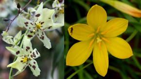 Clases de plantas ornamentales de sombra for Ver plantas ornamentales