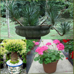 Tipos de plantas ornamentales las plantas tipos seg n su for Clases de plantas ornamentales