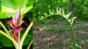 Que tipo de plantas sin semillas se reproducen sexualmente