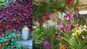 Pin arbustos y enredaderas on pinterest - Plantas enredaderas de crecimiento rapido ...