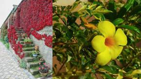 Plantas enredaderas de exterior plantas arbustivas with for Arbustos ornamentales de exterior