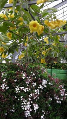Plantas trepadoras para sombra para interior y exterior - Plantas de sombra exterior ...