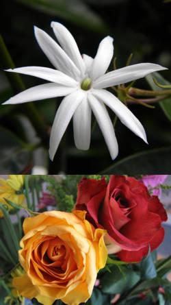 Tipos de aromas