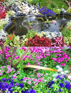 Tipos flores para jardins quotes for Tipos de plantas para jardin