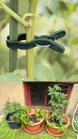 Tutores para jardineria guias y sostenes para plantas - Guia de jardineria ...