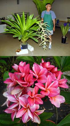 Venta plantas de interior fondos descarga gratuita for Plantas de interior exoticas