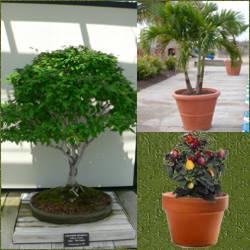 diferentes especies de plantas de ornato plantas de ornato