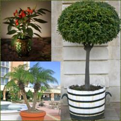 Venta de plantas de ornato arboles y palmeras macetas de interior y