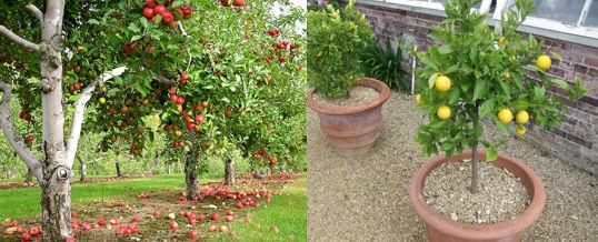 Arboles frutales para jardin gallery of son rboles for Jardines con arboles frutales