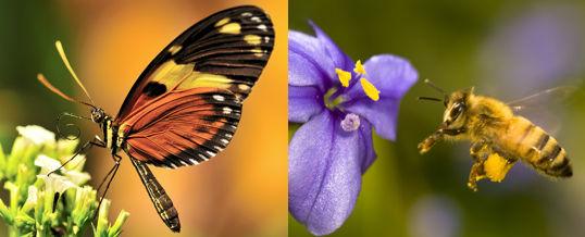 atraer insectos buenos para el jardín