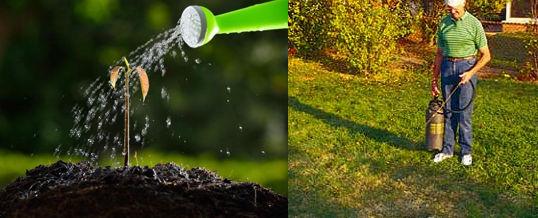 eliminar nemátodos de tu jardín