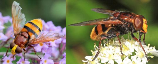 moscas de las flores