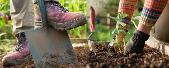 3 consejos basicos para plantar en el jardín