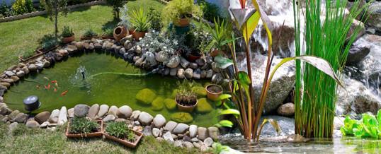 algas en el estanque