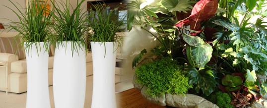 cuidados para plantas de interior