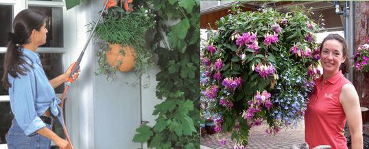 cuidar las plantas colgantes